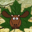 Maple Moose Network icon